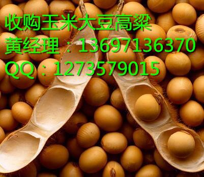 求购玉米小麦大豆高粱青饼大米麸皮棉粕豆粕高筋面粉DDGS等饲料原料