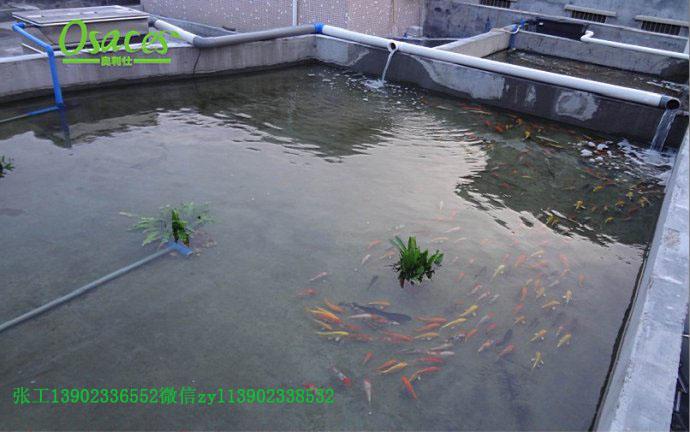 鱼池净化器