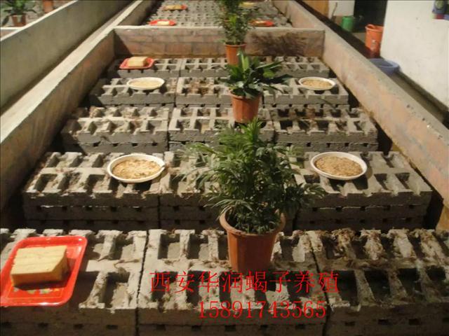 定西土元养殖价格中国蜈蚣养殖场恒温养殖蝎子