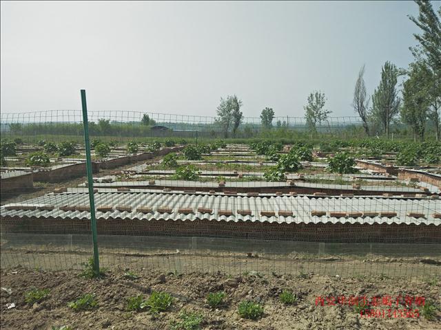 定西土元养殖价格山西有几个蝎子养殖场土元养殖招商