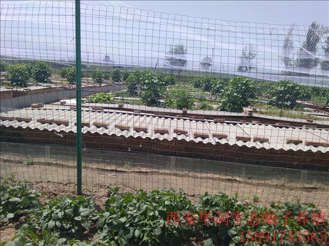 乌海原生态蝎子养殖甘肃蝎子养殖基地养殖蝎子养殖蝎子基地