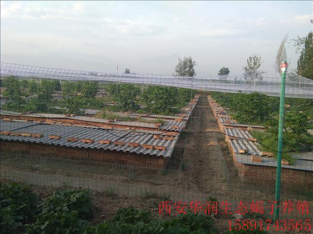 定西土元养殖价格北方蜈蚣养殖中国多少养蝎场